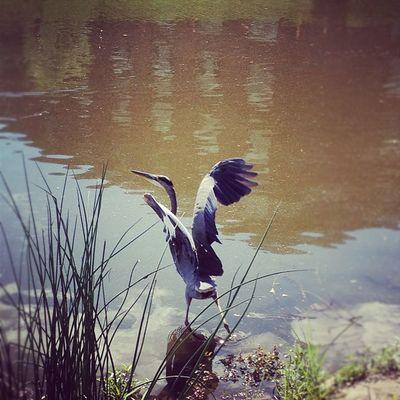 Egret Newpz Bird Beautiful iphoneonly