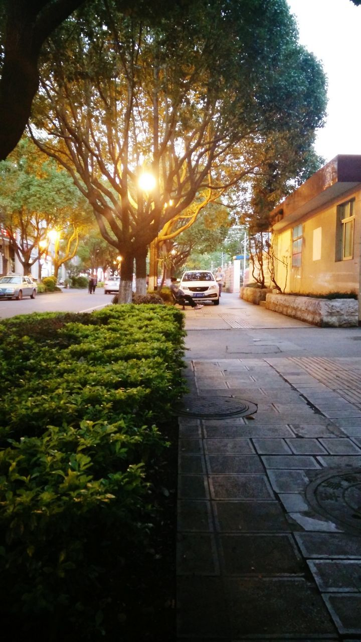 tree, building exterior, built structure, street, outdoors, car, transportation, architecture, day, no people, road, city, nature, sky