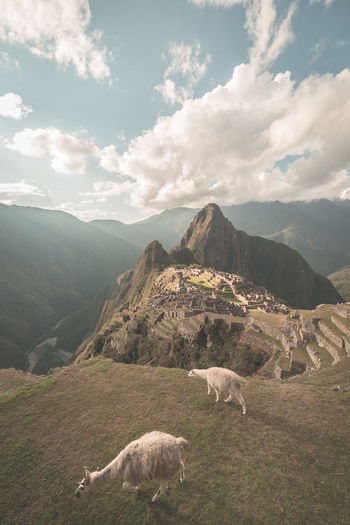 Sheep on mountains against sky