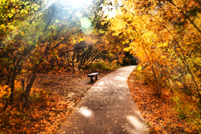 Save me a seat! Tree Season  Autumn Diminishing Perspective Nature Leaves Fall Colors No People Man Made Object Nature Outdoors Fall Beauty Scenics Beauty In Nature Autumn Cozy Relaxing Day Tree Bench The Way Forward Transportation Tree Season  Change bench