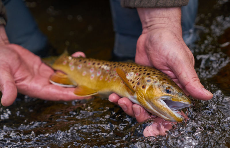 Flyfishing  Fly Fishing Trout Browntrout Catchandrelease Sony α♡Love Nature Outdoors Nature_collection Sony Animals Fish Fishing Water Water_collection Flyfishingjunkie Sony A7 Sonya7II River Autumn Watercolor At The River Outside