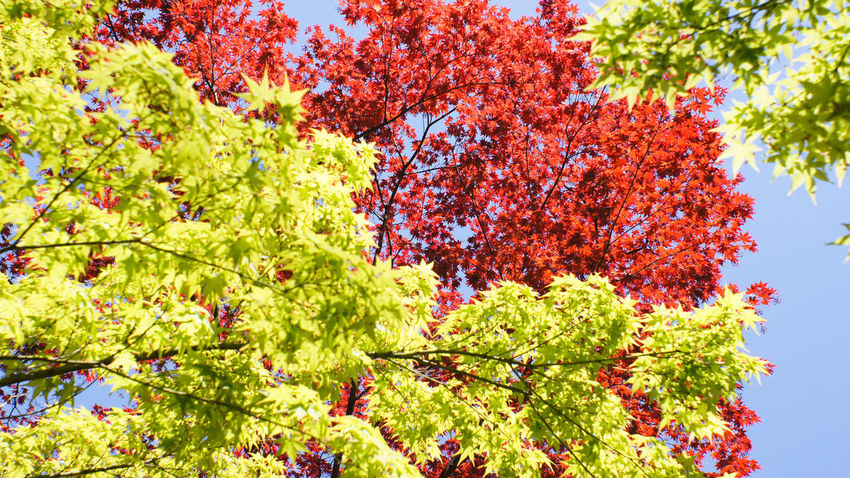 Tree Low Angle View Green Color Leaf Day Sky Nex5 Garden Garden Photography Takumar 28mm F3.5 Buddhist Buddhist Temple