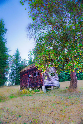Bayview Apple Orchard Beautiful Field Madrona Tree Puget Sound, Washington (USA ) Romantic Whidbey Island Abandoned Buildings Apple Tree Blue Sky Landscape Northwest Old Buildings Orchard Pastoral Peaceful Pine Tree Serene Serenity Nature_collection Shed Trees And Nature The Week On EyeEm