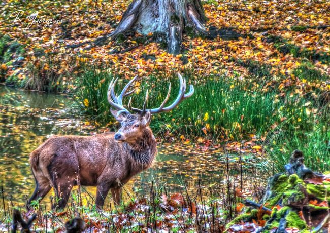 Hdr_Collection Colors Of Autumn EyeEm Best Shots - Landscape Nature_collection
