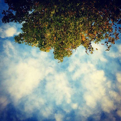 Atardecer de otoño en Castelar Otoño Autumn Tree árbol Leaves Atardecer Sundown Skyporn Clouds Cielo Nubes Nubesdetuciudad
