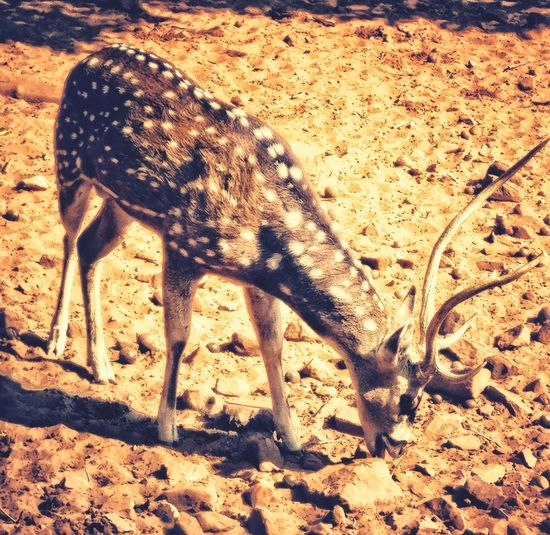Deer story Sand Day Outdoors Close-up Nature First Eyeem Photo