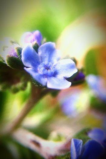 Macro tiny tiny flower.