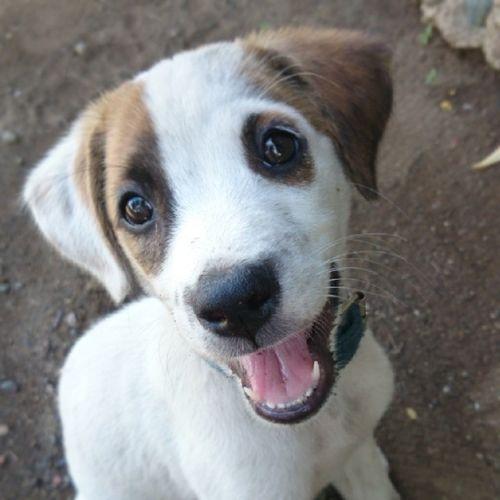 Puppy eyes.. Thechallengigers Jj  Igersmanila Popular likes4likes follow4follow xperiaZ1