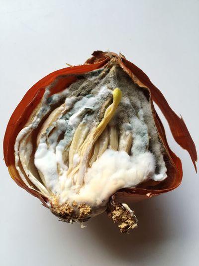 Cipolla  Muffa Mold Onion Onions Natural Progress