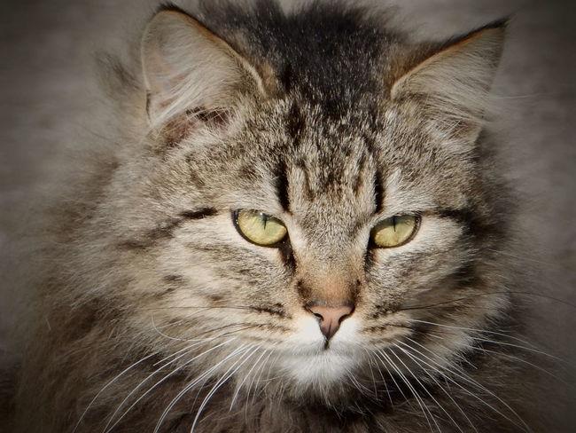 Animal Themes Cat No People One Animal Pets Взгляд  кот котэ