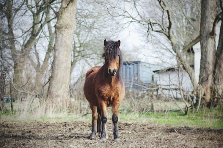 Pony Horse Hello World Cheese! Hi! Taking Photos Enjoying Life Happy Happy Anímals Cute Equestrian Animals Farm Life Farm Animals Pet Portraits
