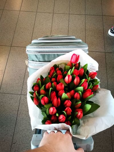 Holland tulips for my special girl ❤ High Angle View Human Body Part Fruit Freshness Healthy Eating Human Hand Food And Drink Red One Person Food People Day Lifestyles Business Finance And Industry Adults Only Outdoors Adult Flower Holland 💕 Holland Tulips Lovely Girlfriends ♥