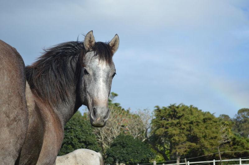 My colt -