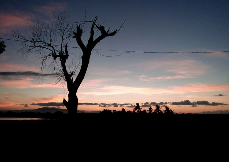 EyeEm Selects Tree Sunset Bird Silhouette Rural Scene Sky Landscape
