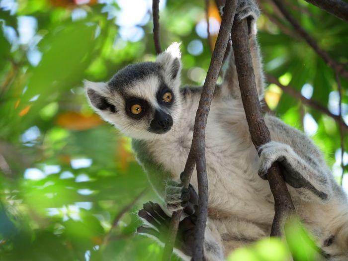 Kobe-shi,Japan Animal Themes Animal Wildlife Animal One Animal Animals In The Wild Vertebrate Tree
