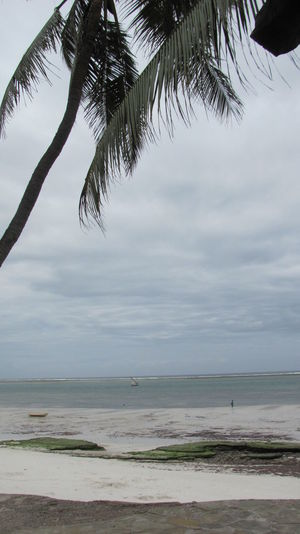 Beach Coastline Indian Ocean Ocean Palm Tree Sands Tourism Traveling Tree By The Sea
