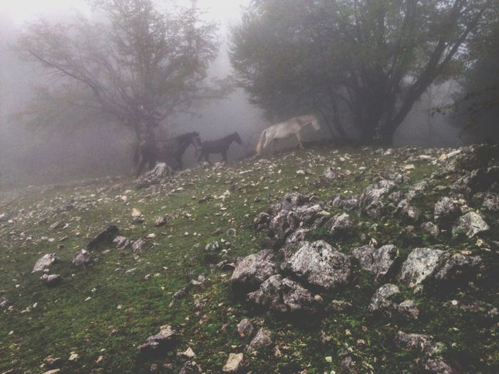Family of horses free , quiet in the fog. First Eyeem Photo