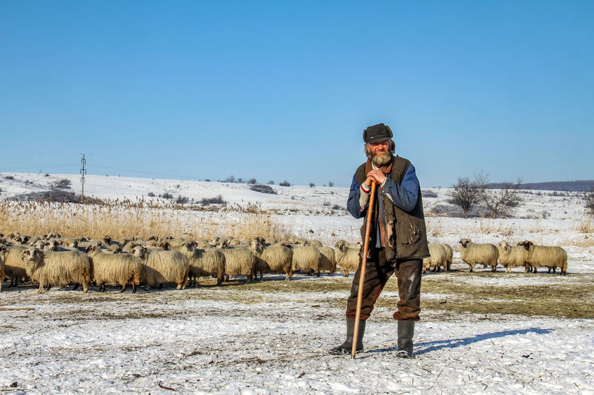 Shepherd Of The Sheep Casual Clothing Clear Sky Cold Temperature Day Domestic Animals Field Full Length Leisure Activity Lifestyles Livestock Looking At Camera Mammal Mature Men Men Mid Adult Men Nature One Man Only One Person Outdoors Portrait Real People Sky Standing Winter