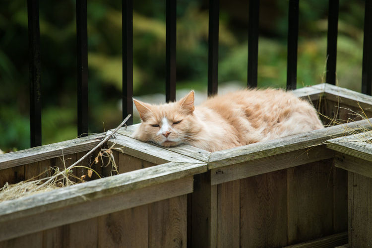 Cat sleeping on railing