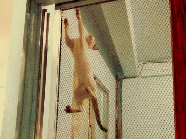 Spidercat Pets Housecat Kitty Cats Doorway