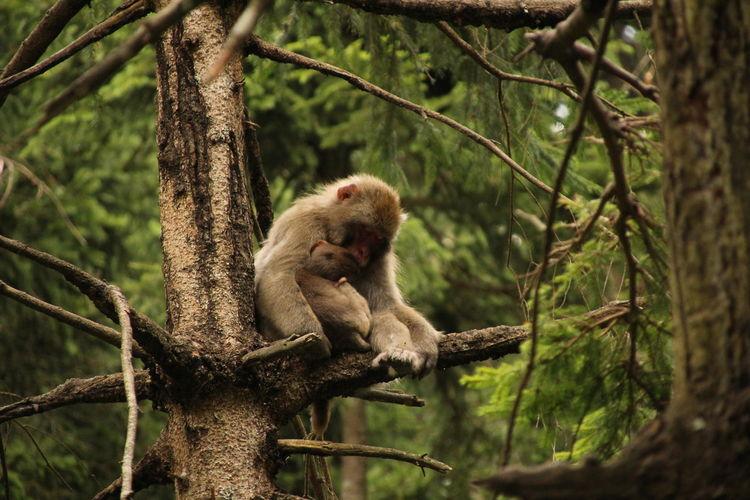 Sleeping EyeEm Selects Baboon Tree Branch Ape Young Animal Climbing Monkey Napping