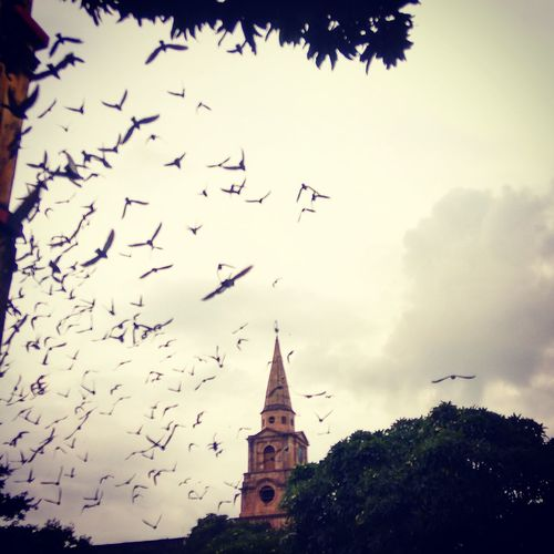 Birds and the baptist Architecture Building Exterior Built Structure Religion Animal Themes Spirituality Place Of Worship Bird Church Low Angle View Flying Animals In The Wild Sky Flock Of Birds Outdoors Cloud - Sky No People Spire  Steeple Outline Town Kolkata Kolkatadiaries Colonial Architecture Colonialcity