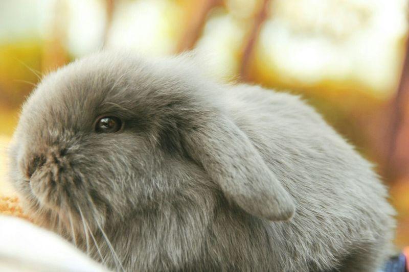 @小椰球 Bunny  Cute Cute♡ 文艺兔