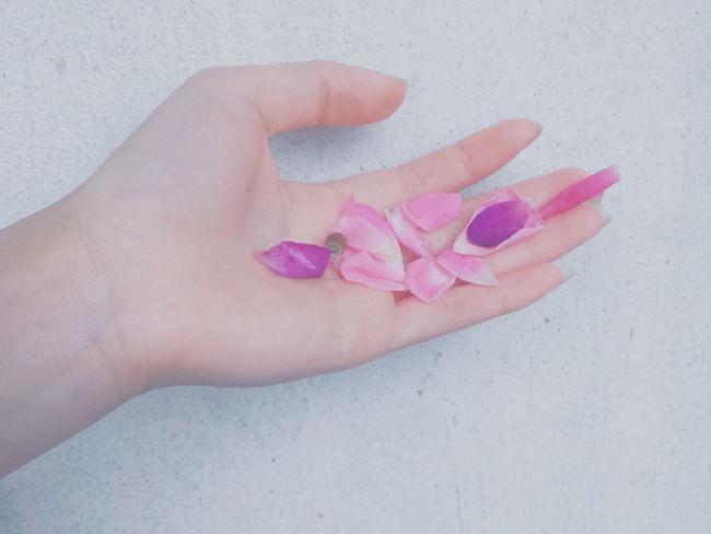 EyeEm Best Shots Vietnamese Photo Flowers Photogrid Photography Photoshoot Photooftheday Minimal Likeforlike #likemyphoto #qlikemyphotos #like4like #likemypic #likeback #ilikeback #10likes #50likes #100likes #20likes #likere Likeforlike EyeEmBestPics Hand Vietnam EyeEm VSCO Xiugp