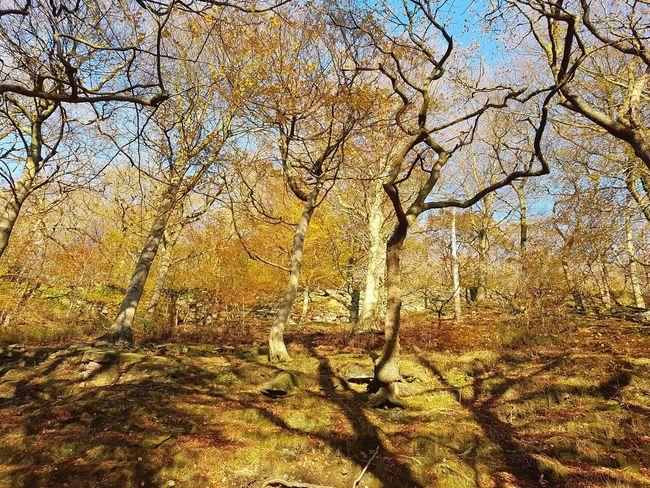 Autumn Eaves Wood Mytholm Calderdale WoodLand Forest Nature Beauty In Nature Sunlight Tree Yorkshire Landscape Autumn Leaves