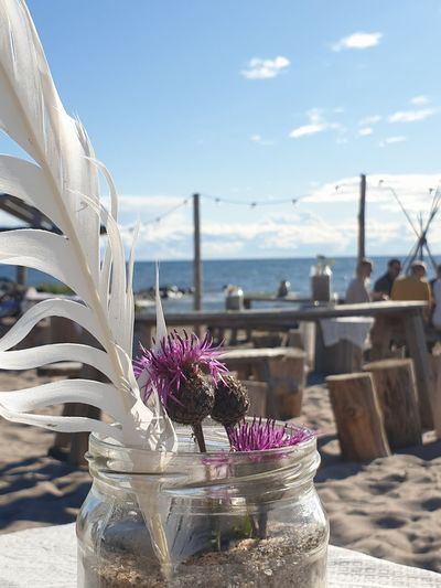 Close-up of flower pot on table against sea