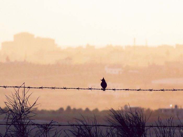 Silhouette bird perching on barbed wire fence against sky