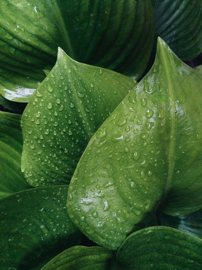 High angle view of water drops on leaves
