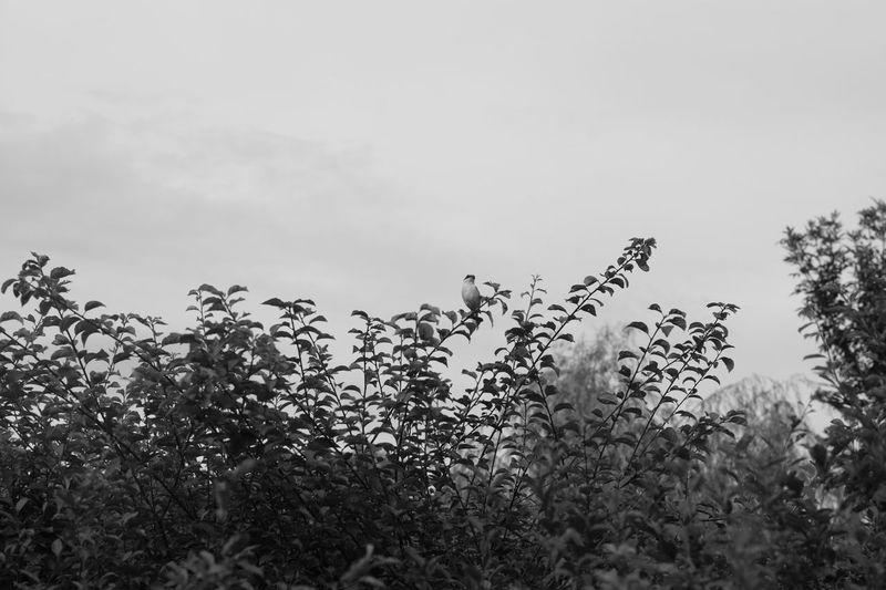 Plant Sky