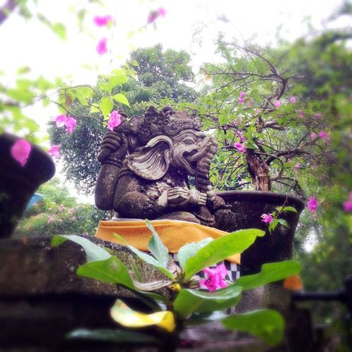 Rainy season in Bali. Plants are lively. パリ ピンク 緑 お庭 雨季 ヒンズー ブーゲンビリア ガネーシャ INDONESIA Garden Pink Green Drizzly Rainyseason Hindu Ganesha Bougainvillea Bali Statue First Eyeem Photo