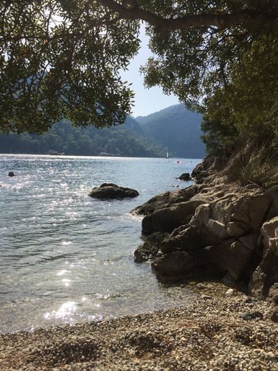 Tatil Deniz Kumsal Tree Nature Water Sea Beauty In Nature Scenics Outdoors Beach Day