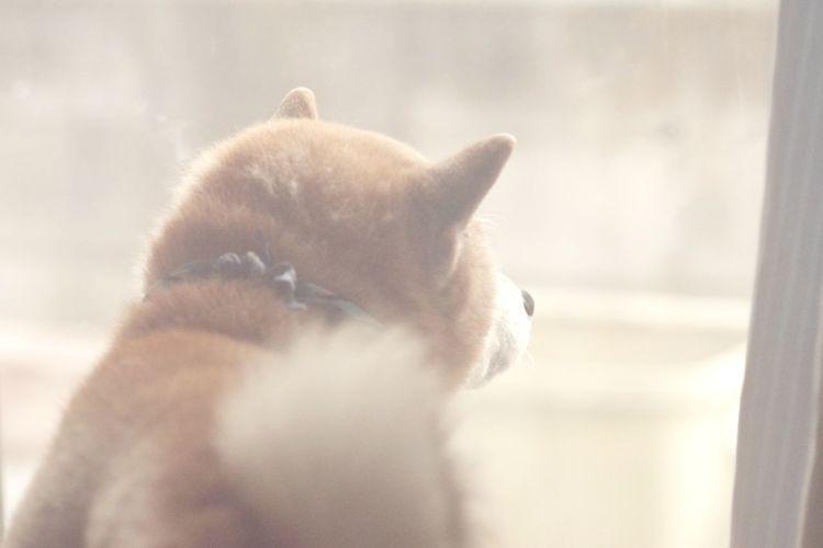 わんこ Pets Dog