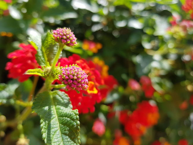 Flower Green Color Leaf Nature No People Growth Plant Outdoors Day Freshness Close-up Flower Head Red Beauty In Nature Fragility Multi Colored