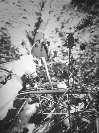 dead flower Blackandwhite Photography Black And White Portrait Dead Flower