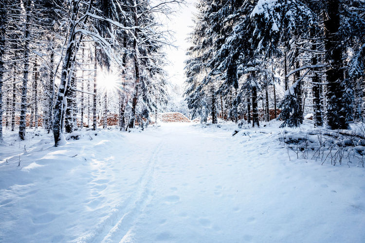 winter moments Snow Cold Temperature Winter Tree Plant White Color Tranquil Scene Tranquility Land Scenics - Nature Nature Covering Beauty In Nature No People Day Non-urban Scene The Way Forward Direction Landscape Outdoors Snowcapped Mountain Harz Harzmountains
