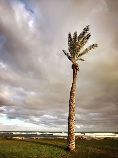 Sky Cloud - Sky Nature Beauty In Nature Tranquil Scene Palm Tree Scenics Tree מייאייפון7 IPhone7Plus Shotoniphone7plus מייבתגלים מייים מייעצים Outdoors Tree Trunk Landscape Horizon Over Water Day Growth No People Beach מיימומנט