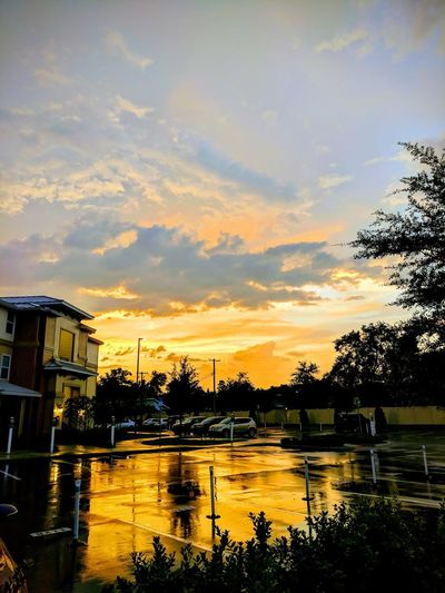 Sunset after the crazy rain storm Tree Water Sunset Swimming Pool Silhouette Reflection Lake Sky Cloud - Sky Palm Tree Tropical Tree Tropical Climate Caribbean Dramatic Sky Reflecting Pool Palm Leaf