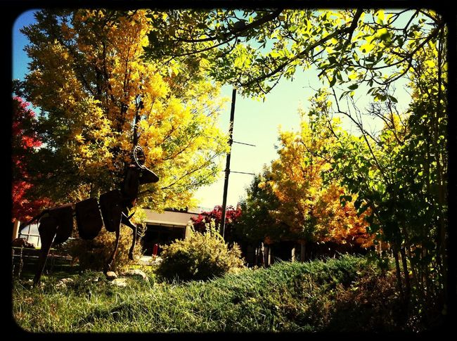 I love fall. Taking Photos Check This Out Trees Sculpture