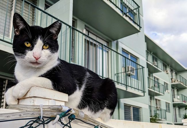 on the fence Hawaii Cat Kitty Domestic Cat One Animal Animal Themes Domestic Animals Feline Day