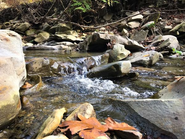 Perspectives On Nature Water Day Nature Autumn Leaves Autumn Colors Ripples Pebbles And Stones Stream Creekbed Creek Autumn Leaf 🍂 Beauty In Nature Outdoors No People Leaf Beauty In Nature