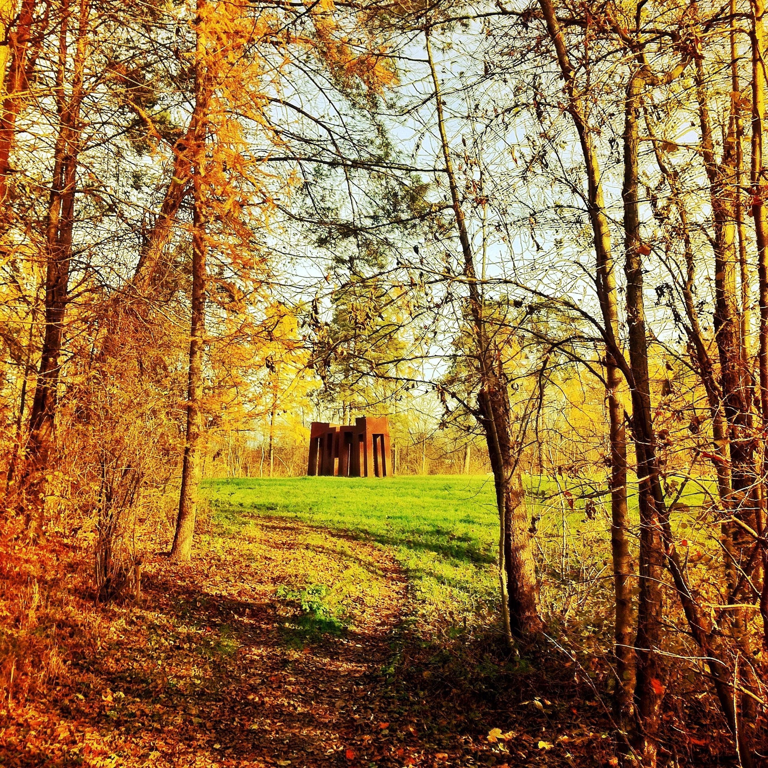 tree, built structure, architecture, autumn, building exterior, tree trunk, grass, tranquility, field, nature, growth, house, landscape, branch, tranquil scene, change, bare tree, beauty in nature, forest, scenics
