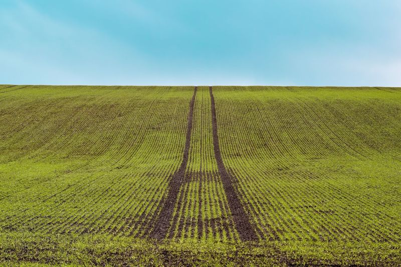 Tramlines. Towton, North Yorkshire. My Favorite Photo U.K Yorkshire Nature Nature_collection Nature Photography Naturelovers Nature On Your Doorstep North Yorkshire Towton Tramlines Farming Spring Field Fieldscape Fields