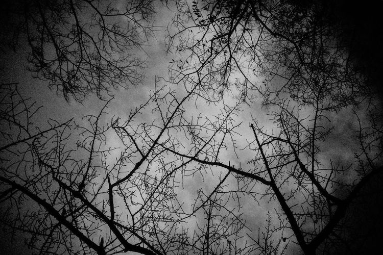 Black And White Friday Tree Bare Tree Branch Nature Beauty In Nature Low Angle View Outdoors No People Tranquility Silhouette Sky Day Scenics