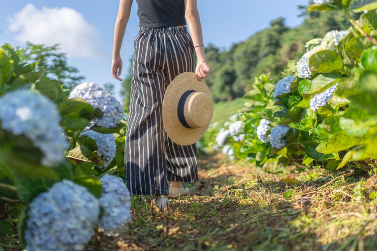 Hydrangea Flower Hydrangea Garden Walking Farm Low Angle View Plant One Person Day Nature Low Section Growth Midsection Women Selective Focus Agriculture Casual Clothing Holding Standing Real People Adult Vegetable Outdoors Focus On Foreground Gardening Farmer