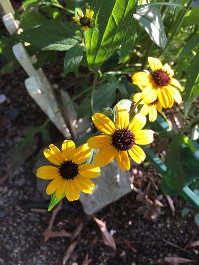 夏の花 2016夏 Enjoying Life おはよう