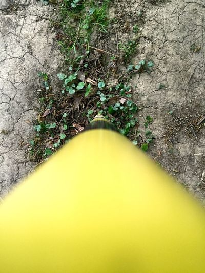 In The Forest Yellow Black Stick Enjoying Life Hello World Check This Out Springtime Showcase April Beautiful Nature No People Grass Break The Mold Paint The Town Yellow
